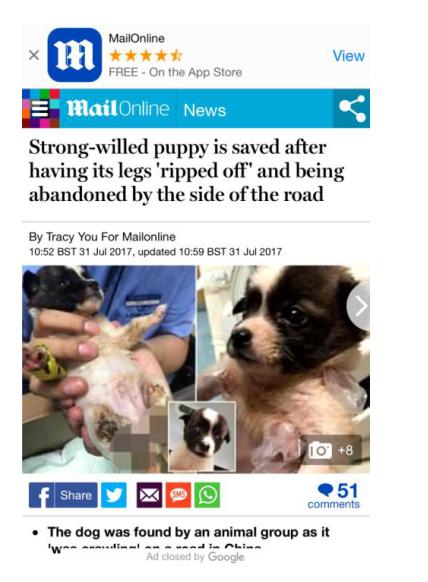 福瑞在成都靠谱宠物医院治愈 英国报纸多次报道 L2iCc